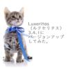 Luxeritas(ルクセリタス)3.4.1にバージョンアップしてみた。